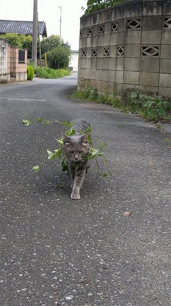 サバイバル訓練中?草ポケモン?植物のドレスをまとったにゃんこ