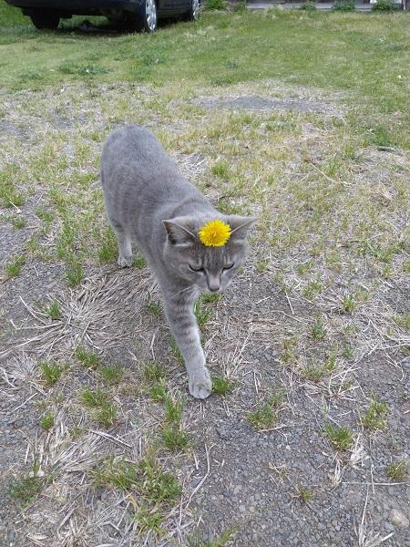 頭に花を乗せるここあちゃん