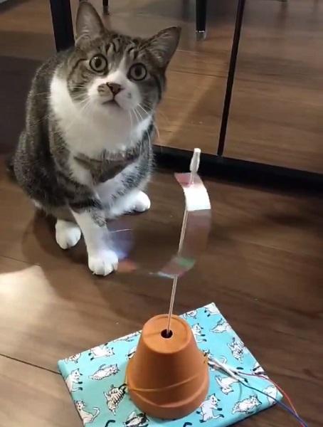 息子が作ったオモチャをガン無視する愛猫 「せめて見て!」