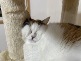 まるでアスキーアート ギュッとつぶれた猫ちゃんの寝顔に爆笑