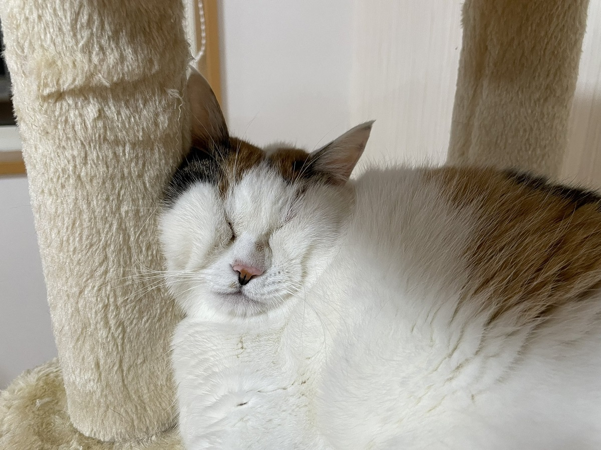 こういう顔文字あるよね ギュッとつぶれた猫ちゃんの寝顔に爆笑