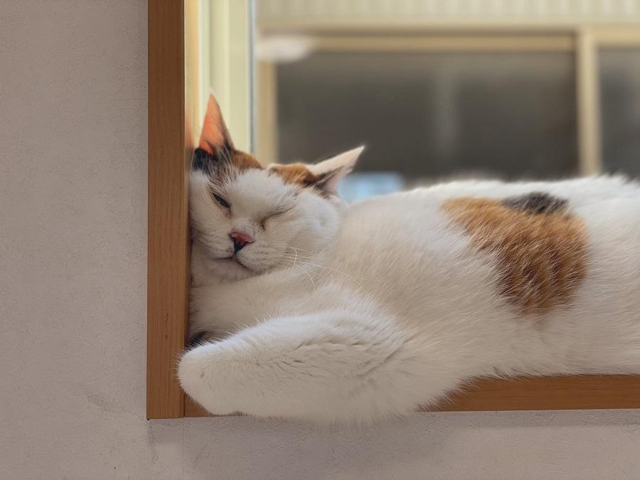 顔を押し付けて眠るのが好きなのかな?