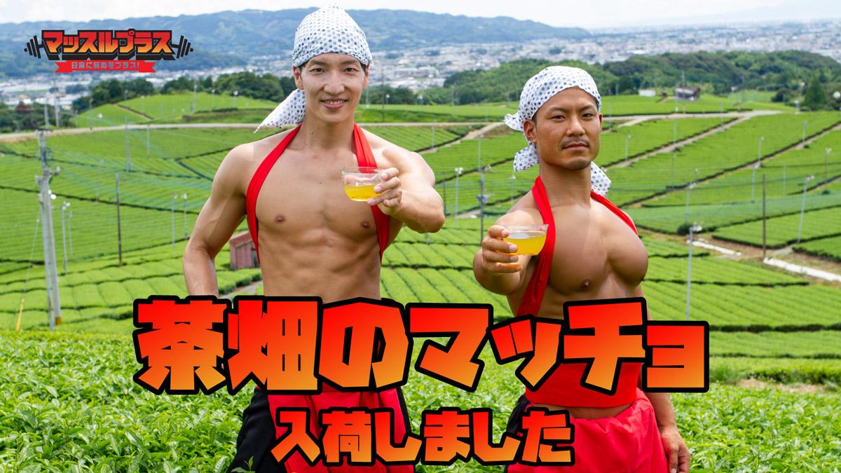 茶畑のマッチョ