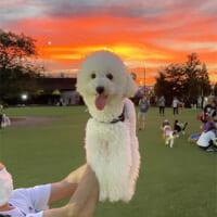 合成写真感がすごいw 夕陽をバックに写るワンコか…