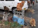 ネコリンピック開幕?表彰台にあがる地域猫たちに憶測が飛び交う