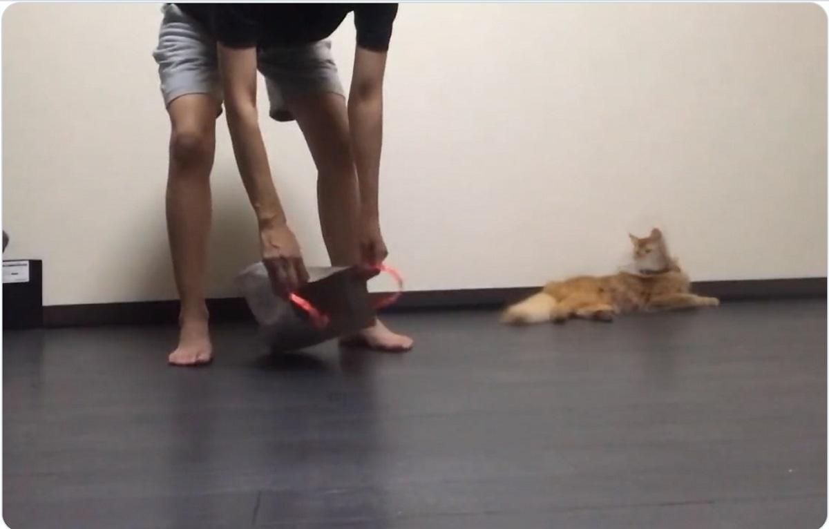 猫飼い必見!? 子猫を簡単に捕まえる方法
