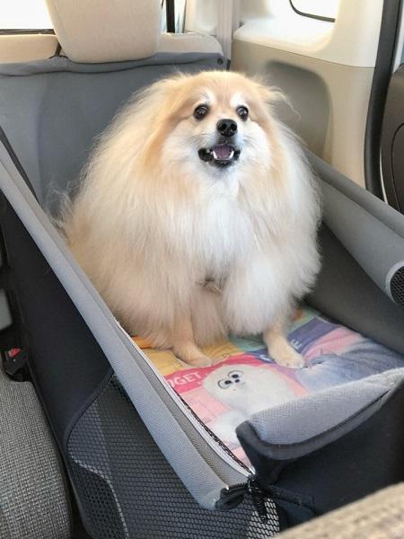 天国から地獄?ドライブを楽しんでいた愛犬が絶望の表情に……