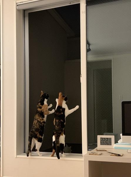 飛び立ったセミを見つめる猫の後ろ姿に子どもの頃の記憶がよみがえる