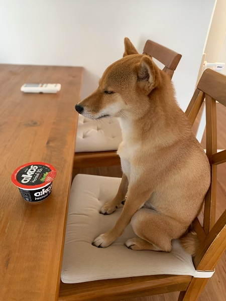 どういう感情!?食卓に座るワンコの表情がシュールすぎると話題