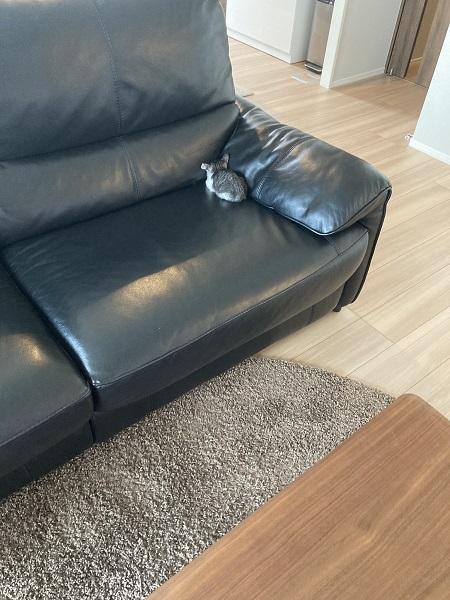 掃除機を怖がる子猫 ソファ隅のかわいすぎる小さな背中に悶絶