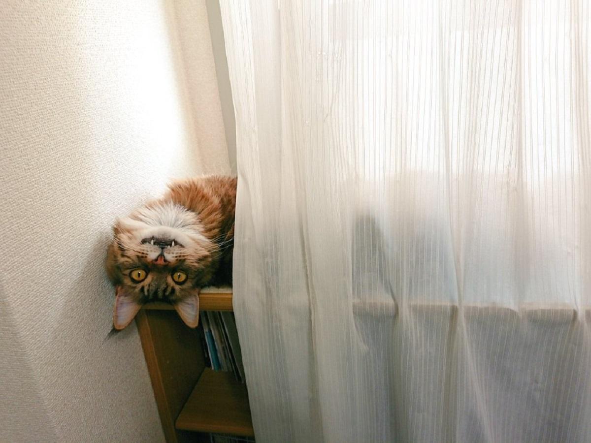 視線を感じて振り返ってみたら……愛猫が化け猫に!?
