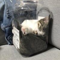 小さい容器の中でスヤスヤ……液体化してしまった子猫