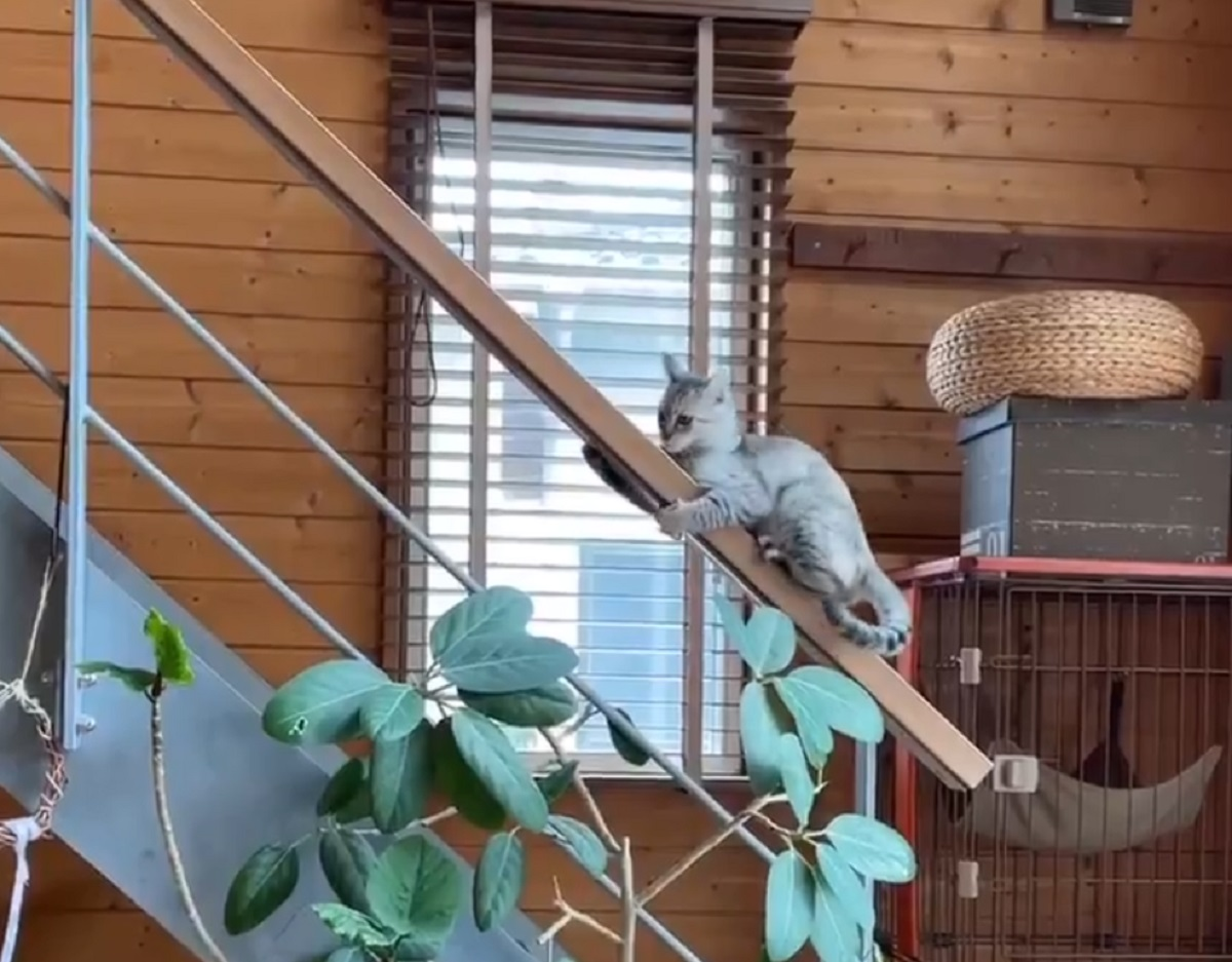 子猫がまさかの階段の手すり降り スルスルー でも飼い主はハラハラ