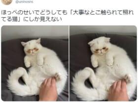 照れてる? ほっぺの下の茶色い毛が特徴的な子猫。