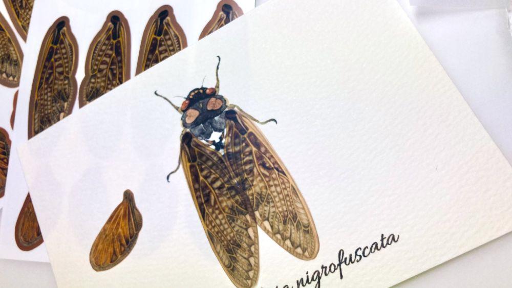 本物のような精巧さ アブラゼミの「虫の翅の立体カード」が反響。