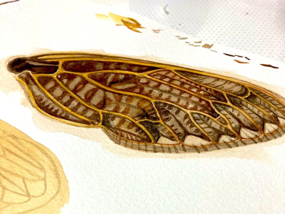 様々な用紙を試したというアブラゼミの翅部分。