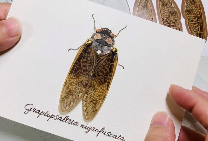 「虫の翅の立体カード」は本物の虫が羽ばたいているような芸術品