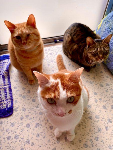 エルくん・モカくん・ヤマトくんを加えた総勢5匹の猫と暮らしている飼い主。