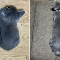 落ちている姿でも丸分かり 子猫の成長速度にびっくり