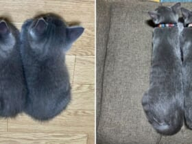 生後1か月と4か月の猫の落ちている姿の対比が話題。