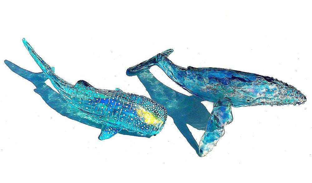 主に海洋生物を作品題材にしている投稿者。