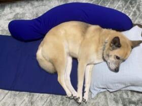 飼い主の仮眠場所を占拠したわんこ写真が話題。