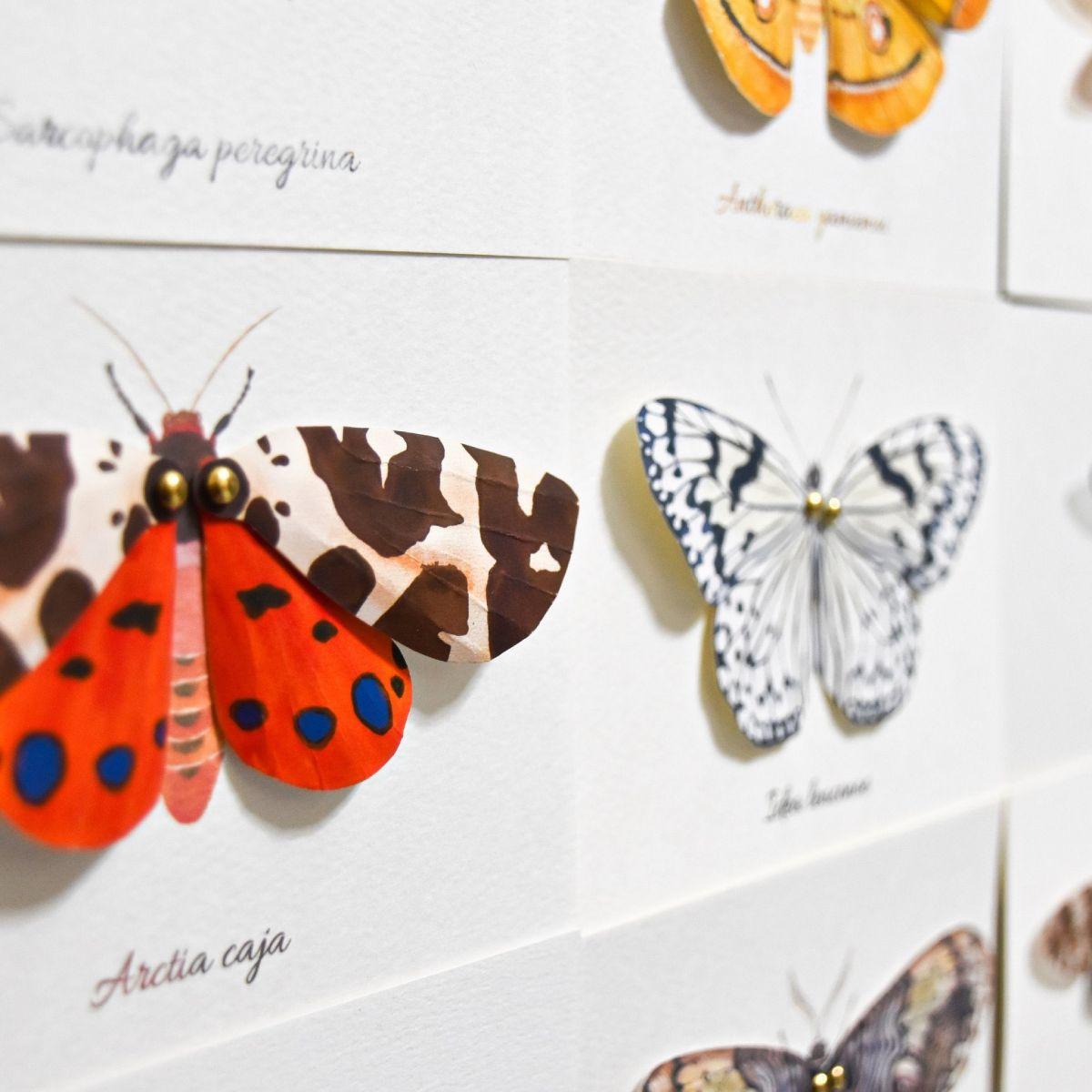 蛾の羽ばたく姿が作品の着想だったという投稿者。