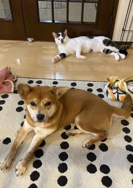 飼い主さん宅に先住している猫ちゃんたちとも仲良しむぎちゃん。
