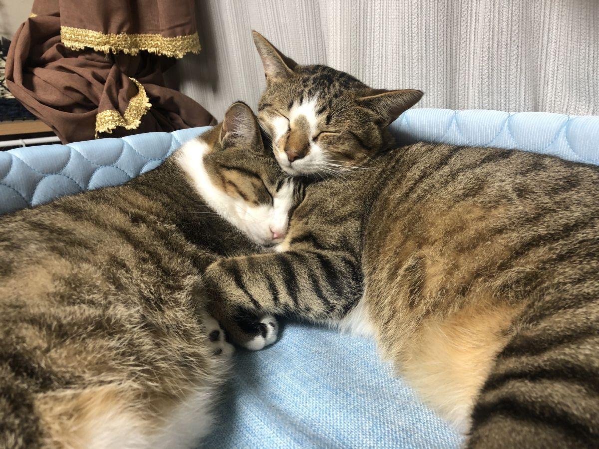 兄妹ということもあり、ソーダくんとレモンちゃんはとっても仲良し。