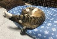 ストレッチ中?美意識高めの猫さん。