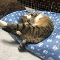 日々の身体のお手入れは大切ニャ 美意識高めの猫さん