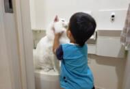 お子さんの説得にもトイレを譲らないトヨちゃん(やしゅうさん提供)