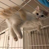 ケージの上でくつろぐ子猫 足がぷらぷらして楽しいのかな?