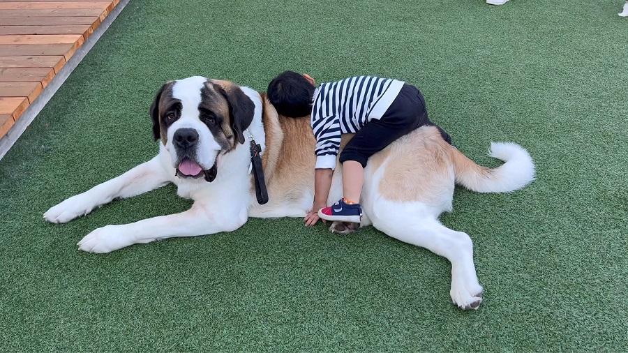 「全人類の憧れ」バーナード犬にもふもふする子どもがうらやましすぎる