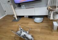 ハンモックで寝ながらテレビを見るこゆきさん(ぽてこゆこめ@かに(飼い主の名)さん提供)