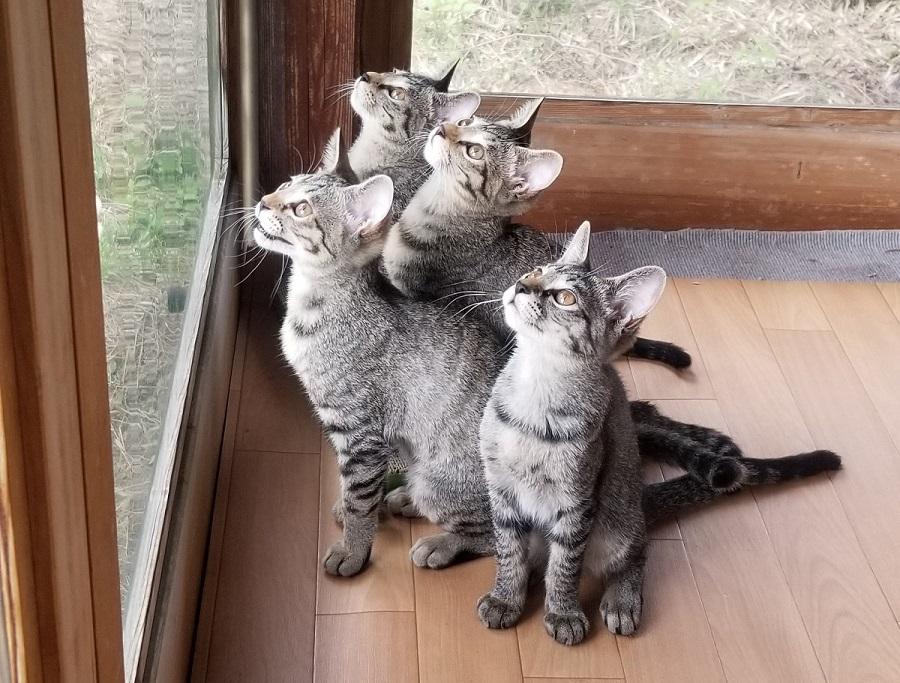 仲良しの4姉妹猫ちゃん