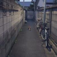 路地裏の写真が完全に「ホラーゲームの導入」 猫に…
