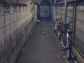 猫についていくと危険?路地裏の写真が完全に「ホラーゲームの導入」