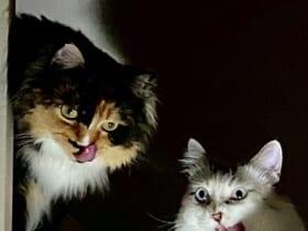 「これが注文の多い料理店か」2匹の猫が見せた表情が完全にホラー