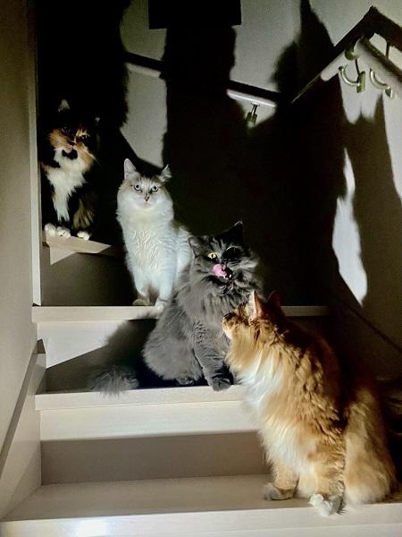 4匹揃った姿も……怖いです