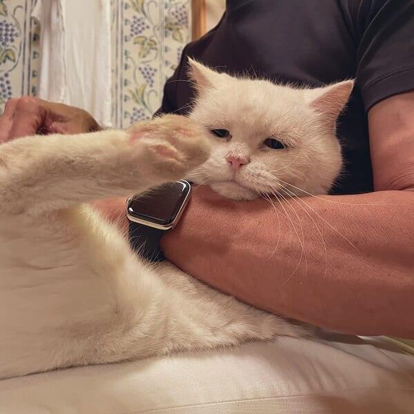 爪を切られるおじいちゃん猫 諦めきった表情が「切な可愛い」