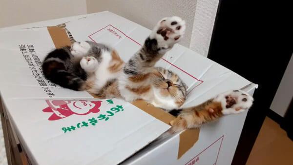 ウソみたいな場所で熟睡する猫ちゃん 気持ちよさそうな表情にほっこり