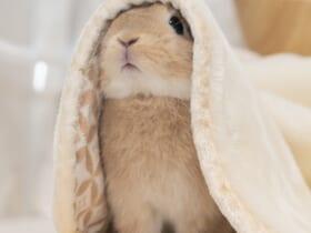 あなたが聖母様ですか?うさぎが見せたかわいすぎる姿にメロメロ