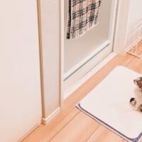 扉の前でお母さんを待ち続ける忠猫に「かわいいがす…
