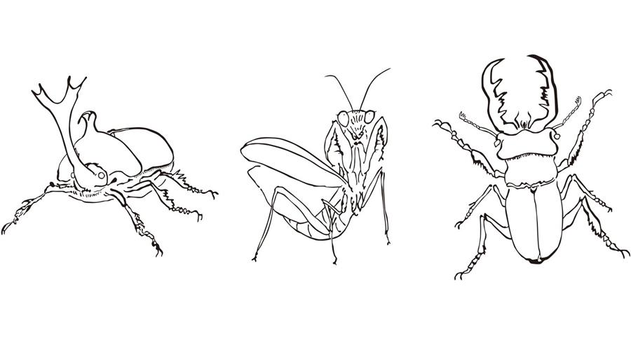 ダウンロード式昆虫ぬり絵