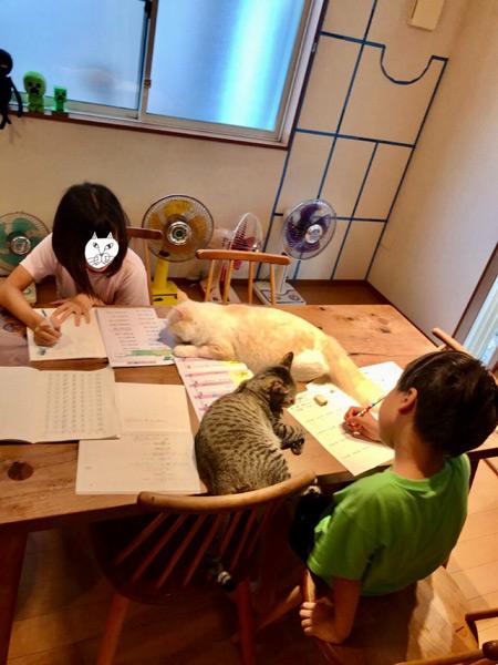 お子さんたちは宿題中(なみそさん提供)