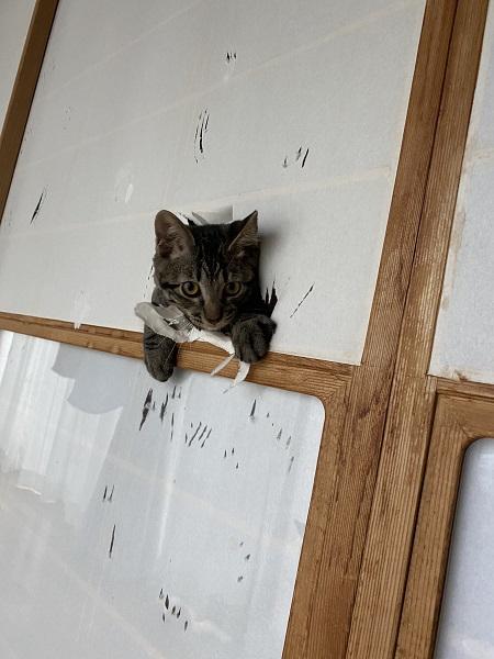 猫飼いにとってのあるある 障子を破って顔を出す猫に多くの共感