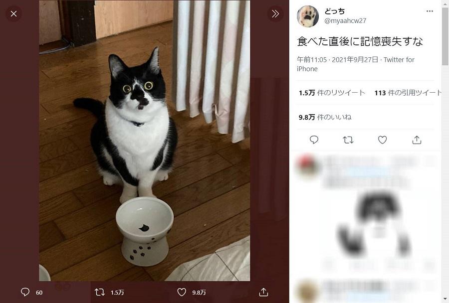 「食べた後に記憶喪失すな」猫ちゃんの見事なキョトン顔にクスッ