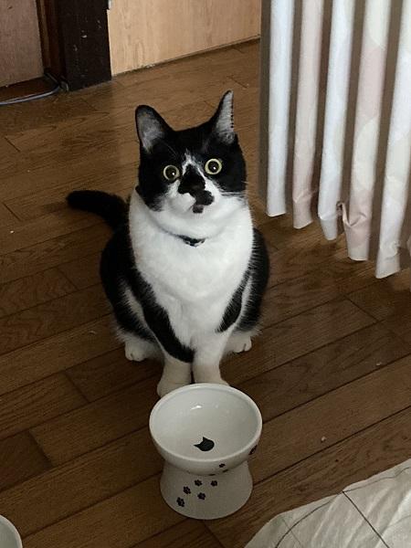 ごはんを食べた後にも関わらずこの表情である