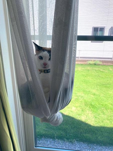 モモさんもカーテンに乗せてみた